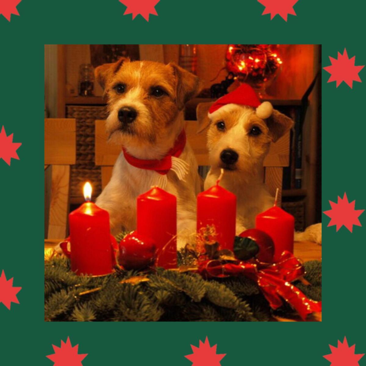 Happy Advent Time